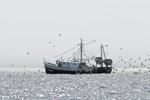 Gulls Circling Fishing Trawler at Entrance to Narragansett Bay, Narragansett and Jamestown, RI