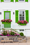 White House with Green Trim and Pink Flowers, Stonington Borough, Stonington, CT