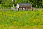 Small Wooden Barn and Fences with Buttercups in Pasture at Aldemere Farm, Rockport, ME