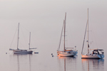 Early Morning Light through Fog over Sailboats in Mooring Field in Rockland Harbor; Rockland; ME