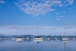 Early Morning Light over Sailboats in Mooring Field in Rockland Harbor, Rockland, ME