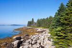 Spruce Trees and Rocks on Shoreline of Camp Island at Low Tide, Deer Island Thorofare, Stonington, ME
