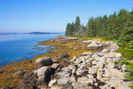 Spruce Trees and Rocks on Shoreline of Camp Island at Low Tide, Deer Island Thorofare, Stonington, ME