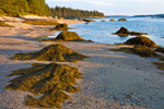 Rockweed-covered Rocks on Beach at Low Tide on Shoreline of McGlathery Island, near Merchant Row, Stonington, ME