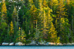 Late Evening Light on Spruce Forest along Shoreline of Vinalhaven Island from Seal Bay, Vinalhaven, ME