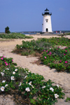 Edgartown Light with Roses (Rosa rugosa) in Bloom, Martha's Vineyard, Edgartown, MA