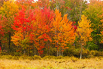 Red Maples at Marsh Edge along Beaver Brook in Autumn, Phillipston and Templeton, MA
