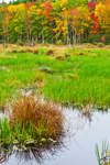 Freshwater Marsh along Beaver Brook in Autumn, Phillipston and Templeton, MA