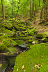 Moss-covered Rocks in Streambed Flowing through Mixed Deciduous and Conifer Forest, Colebrook, CT