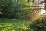 Early Morning Sunbeams along Forest Trail, Colebrook, CT