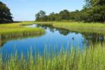 Salt Marsh and Tidal Creek off Cedar Island Cove, Mashomack Preserve, Coecles Harbor, Long Island, Shelter Island, NY
