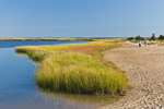 Salt Marshes and Lighthouse Beach, Martha's Vineyard, Edgartown, MA