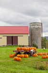 Pumpkins, Barn and Silo on Keep Tryst Farm, Great Lakes Seaway Trail, Lake Erie Region, Ripley, NY