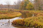 Oneida Pool, Freshwater Wetlands and Autumn Colors, Oak Orchard Swamp, Iroquois National Wildlife Refuge, Orleans County, Shelby, NY