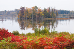 View of Ringneck Marsh in Autumn, Oak Orchard Swamp, Iroquois National Wildlife Refuge, Orleans County, Shelby, NY
