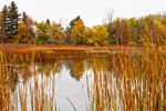 Freshwater Marsh in Oak Orchard Wildlife Management Area, Genesee County, Alabama, NY