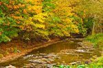 Fall Foliage along Twelve Mile Creek, Great Lakes Seaway Trail, Larsons Corners, Erie County, PA