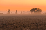 Ground Fog at Predawn over Field of Clover and Lamb's Quarters, Lake Ontario Region, Carlton, NY