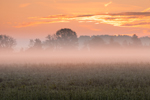 Ground Fog at Sunrise over Field of Clover and Lamb's Quarters, Lake Ontario Region, Carlton, NY