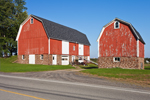Big Red Barns with White Trim, Great Lakes Seaway Trail near Lake Ontario, Wayne County, Williamson, NY