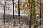 Early Snowstorm in Autumn along the Millers River, near Bearsden Conservation Area, Athol, MA