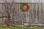 Close-up View of Natural Wood Barn with Holiday Wreath, Old Apple Tree and Split Rail Fence, Marlboro, VT