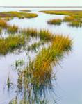 Salt Marsh, Marmora Coastal Wetlands, Dennis, NJ