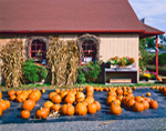 Maynard's Farm Stand, Old Saybrook, CT