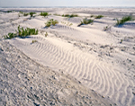 Wind-blown Sands, Little Talbot Island State Park, Little Talbot Island, FL