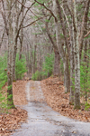 Country Road through Forest, Sutton, MA