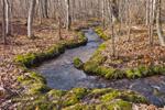 Small Stream Flowing through Forest near Manchaug Pond, Sutton, MA