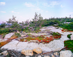 Granite and Vegetation on Schoodic Point, Coastal Ecosystem, Acadia National Park, Winter Harbor, ME