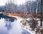Wetlands in Early Winter along Priest Brook, Birch Hill Wildlife Management Area, Winchendon, MA