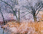 ice-covered Trees and Grasses along Beaver Kill Creek, Catskill Mountains, Saugerties, NY