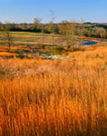 Golden Grasses in Rural Landscape, Carroll County, GA