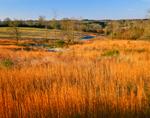 Golden Grasses in Rural Landscape, Carroll County, GA
