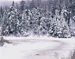 Wetlands and Bordering Conifer Forest in Winter, Green Mountain National Forest, Searsburg, VT