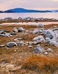 Rocks and Grasses on Shoreline of Quabbin Reservoir, New Salem, MA