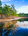 New Long Pond, Myles Standish State Forest, Plymouth, MA