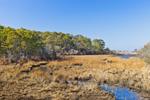 Salt Marsh and Maritime Forest, Assateague Island National Seashore, Assateague Island, MD