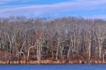 Woodlands at Mashacket Cove, Martha's Vineyard, Edgartown, MA