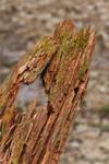 Close Up of Old Stump along Gulf Brook, Athol, MA