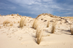 Sand Dunes and Grasses under Dark Clouds at Cape Henlopen State Park, Lewes, DE