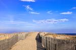 Fences along Path through Sand Dunes at Cape Henlopen State Park, Lewes, DE