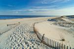 Fences along Path through Sand Dunes to Beach at Cape Henlopen State Park, Lewes, DE