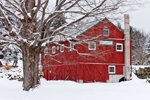 Red Barn and Sugar Maple Tree in Winter at Little Creek Farm, New Salem, MA