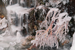 Ice-covered Branches in Waterfall on Sargent Drive near Somes Sound, Acadia National Park, Mt Desert Island, Mt Desert, ME