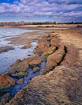 Salt Water Marsh and Mud Flats with Hay Fields in Distance, Wharton Point, Maquoit Bay, Brunswick, ME