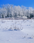 Snowy Field and Frosted Trees, Lincoln, ME