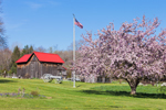 Natural Wooden Barn with Red Roof, Old Wagon, Flagpole, and Apple Tree in Spring, Warren, MA